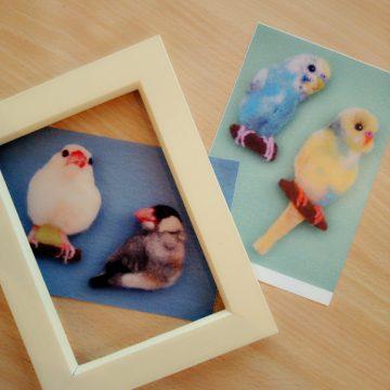 文鳥とインコの羊毛フェルトブローチポストカード